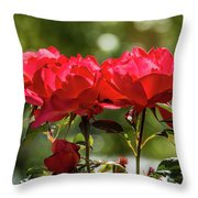 Roses On A Sunny Day Throw Pillow