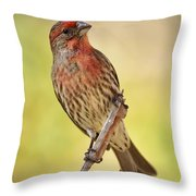 Rosy Finch Macro Throw Pillow