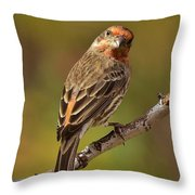 Rosy Finch Posing I Throw Pillow