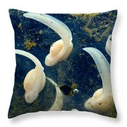 Rosy Ground Frog Eggs Throw Pillow