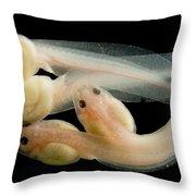 Rosy Ground Frog Tadpoles Throw Pillow