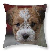 Rough Coat Jrt Pup Throw Pillow