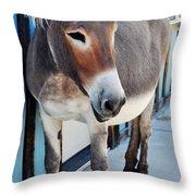 Route 66 Burro Oatman  Throw Pillow