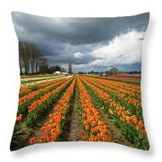 Rows Of Colorful Tulips At Festival Throw Pillow