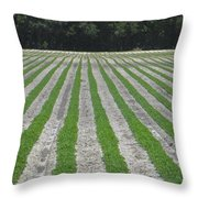 Rows Of Crops Throw Pillow