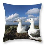 Royal Albatrosses Nesting Throw Pillow