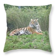 Royal Bengal Tiger Throw Pillow