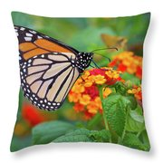 Royal Butterfly Throw Pillow