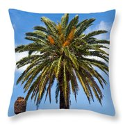 Royal Palm In Florida Throw Pillow
