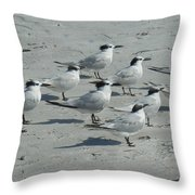 Royal Terns #3 Throw Pillow