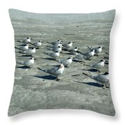 Royal Terns #4 Throw Pillow