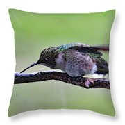 Rubbing Its Bill - Ruby-throated Hummingbird Throw Pillow