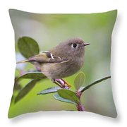 Ruby Crowned Kinglet Throw Pillow