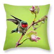 Ruby Garden Hummingbird Throw Pillow