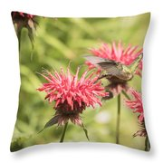 Ruby Throated Hummingbird 1-2015 Throw Pillow