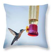 Ruby-throated Hummingbird 4 Throw Pillow