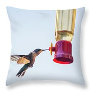 Ruby-throated Hummingbird 5 Throw Pillow