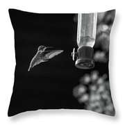 Ruby-throated Hummingbird Bw Throw Pillow