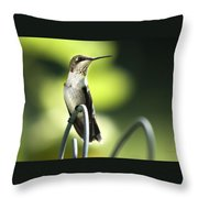 Ruby-throated Hummingbird Throw Pillow by Christina Rollo