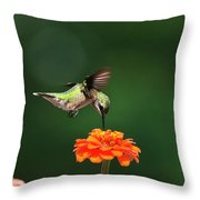 Ruby Throated Hummingbird Feeding On Orange Zinnia Flower Throw Pillow by Christina Rollo