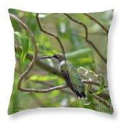 Ruby-throated Hummingbird - Female Throw Pillow