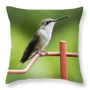 Ruby-throated Hummingbird Throw Pillow