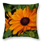 Rudbeckia Flower In Bloom Throw Pillow