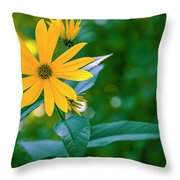Rudbeckia Flowers In Bloom Throw Pillow