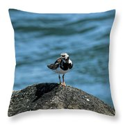 Ruddy Turnstone 2 Throw Pillow