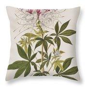 Ruff-necked Hummingbird Throw Pillow