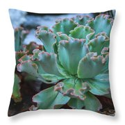 Echeveria Rosea  Throw Pillow