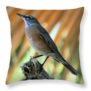 Rufous-backed Robin Throw Pillow