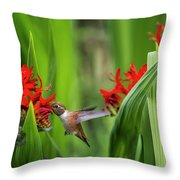 Rufous Hummingbird Feeding, No. 3 Throw Pillow by Belinda Greb
