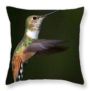 Rufous Hummingbird In Flight Throw Pillow
