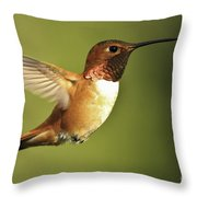 Rufous Hummingbird Throw Pillow