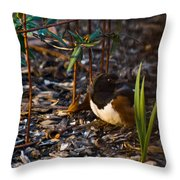 Rufous Sided Towhee At A Glance Throw Pillow