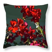Rufus Humming Bird At Sunrise  Throw Pillow
