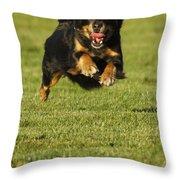 Run Dog Run Throw Pillow