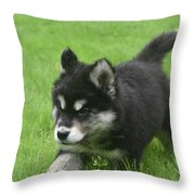 Running Alusky Puppy Dog Stretching Out His Stride Throw Pillow