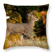 Running Buck Throw Pillow by Larry Ricker