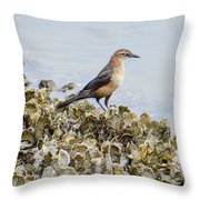 Rusty Blackbird #6 Throw Pillow