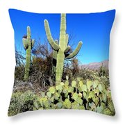 Sabino Canyon Throw Pillow