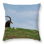 Sable Antelope On Hill Throw Pillow