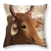 Sacred Cow Throw Pillow