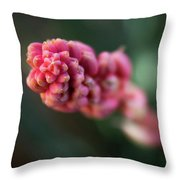 Sacred Geometry In The Sonoran Desert Throw Pillow