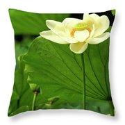 Sacred Lotus In Black Frame Throw Pillow