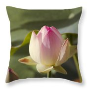 Sacred Lotus - Nelumbo Throw Pillow