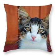 Sad Cat Throw Pillow