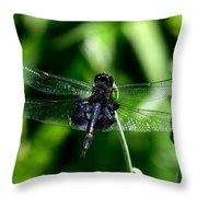 Saddlebag Dragonfly Throw Pillow