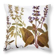 Sage, 1613 Throw Pillow